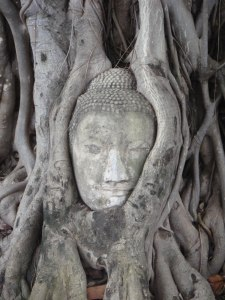 Cabeça do Buda - Ayutthaya